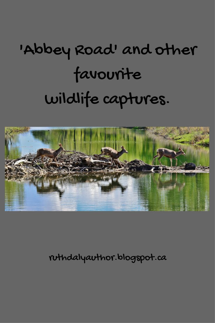 Some favourite wildlife photos