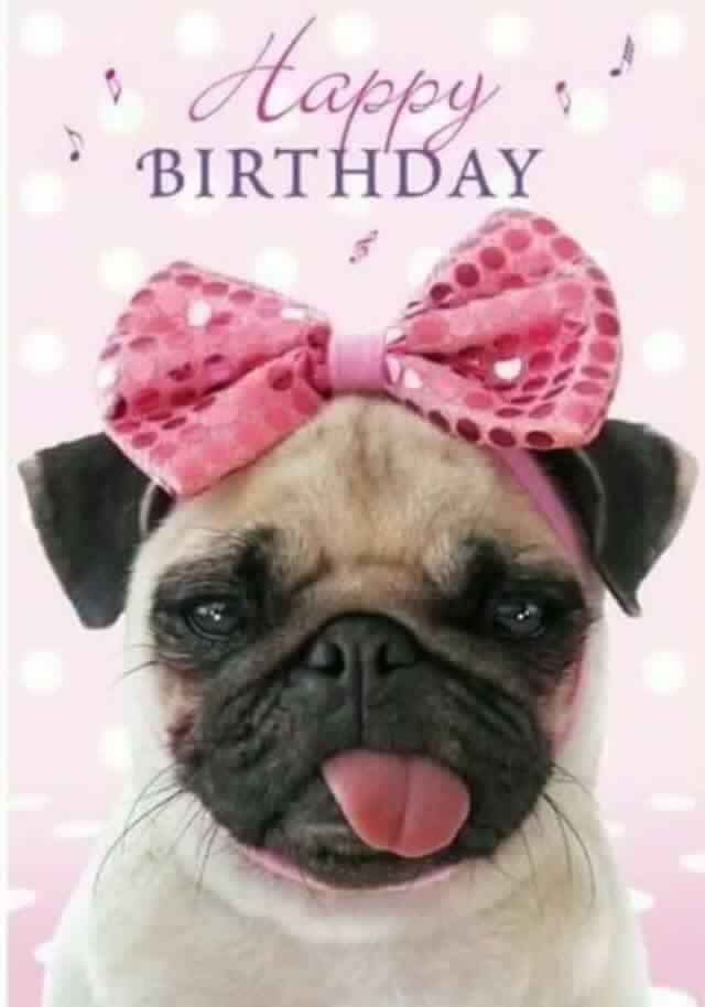 Картинки мопсы с днем рождения, ураза