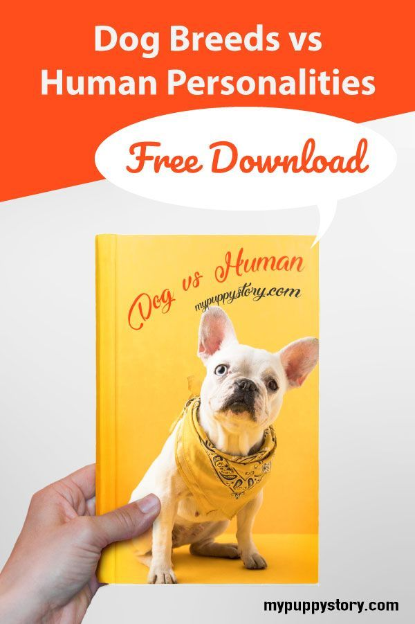 Dog Breeds Vs Human Personalities Our Pets Group Board Dog
