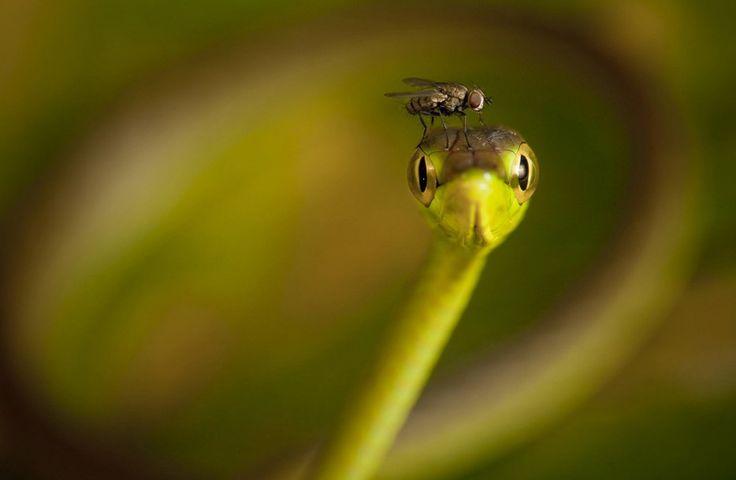 Ces photos étonnantes montrent les animaux commevous ne les avez jamais vu auparavant. Chaque image est un rappel que nous partageons la planète avec des créaturesvraiment impressionnantes. La voile d'une grenouille sous la pluie sur un voilier fait maison. Penkdix Palme Eko Adiyanto Un éléphant protège des charognards le corps d'un ami qui est tombé. …