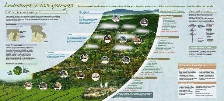 Infografía sobre las yungas.