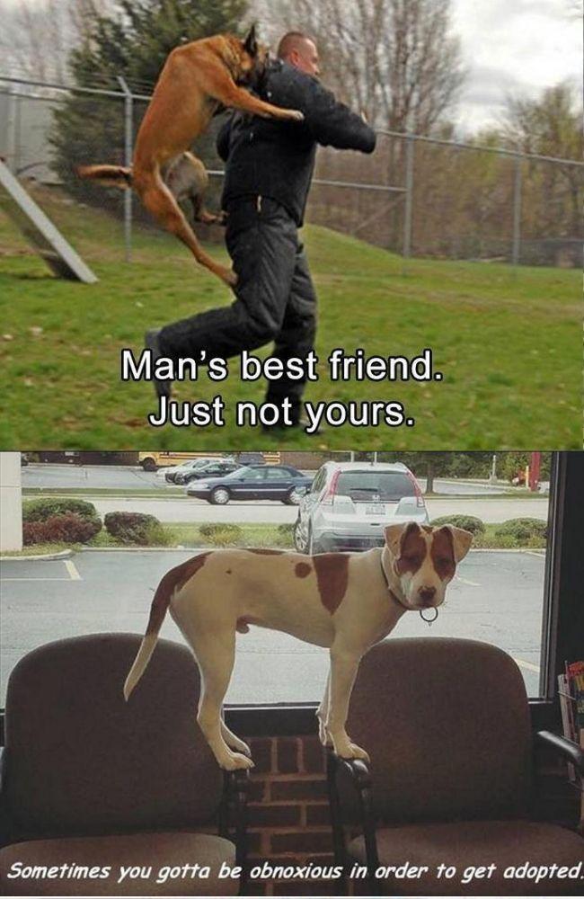 Top 30 Bad Dog Memes Bad Dog Dog Memes Dogs