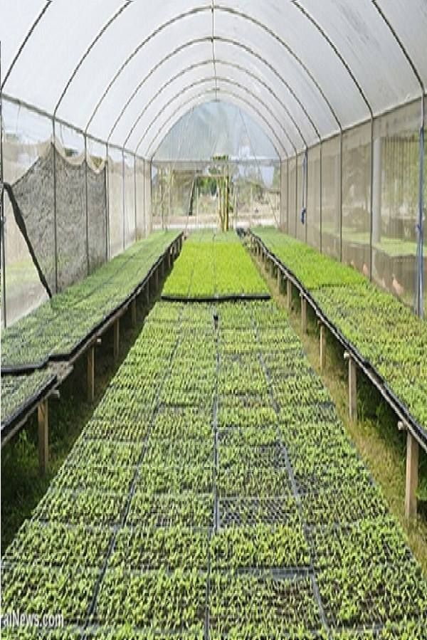 Here Are Some Best Greenhouse Ideas Greenhouses Rand Homemade Greenhouse Ideas In 2020 Solar Farm Greenhouse Solar