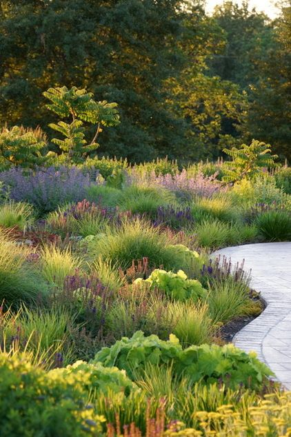 this drift look is what you want on your slope area / contemporary landscape by Adam Woodruff + Associates, Garden Artisans