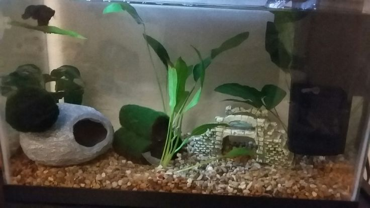This is my bettas 5.5 gallon tank with a heater and filter:) this is what bettas should be kept in. not jars, vases or those little .5 gallon betta cubes!