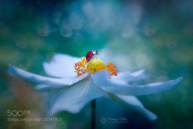glamorous ladybug by Monique_Felber