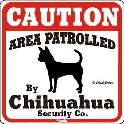 They are little but mean! In my case, I have two chihuahua mixes.