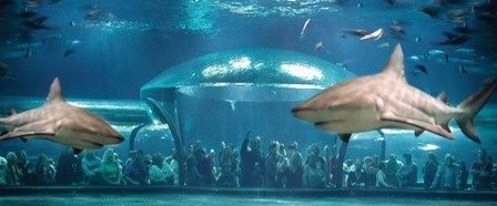 The Oklahoma Aquarium is home to the worlds largest captive bull sharks and hundreds of other underwater creatures.