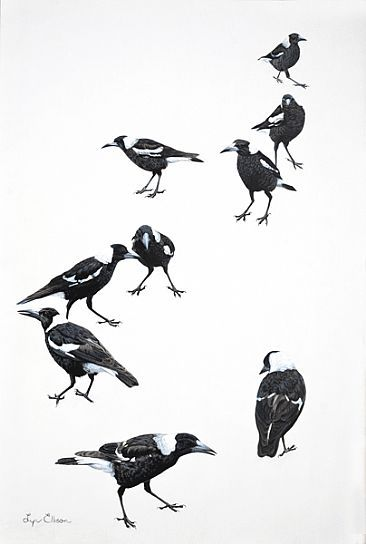 The Junior League - Australian magpies by Lyn Ellison