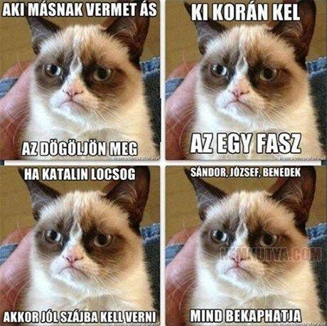 grumpy cat magyar