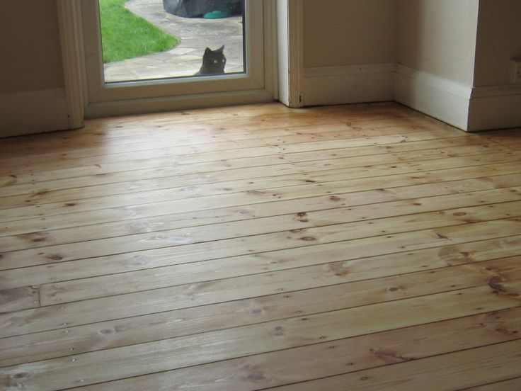 Pussy would love to walk on the wet lacquer in Birstall LE7