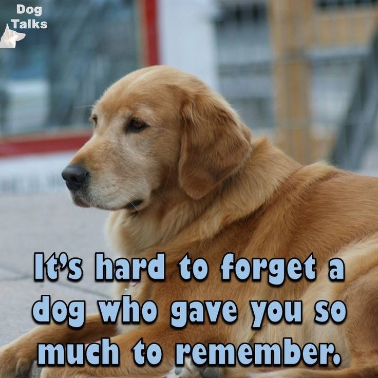 Amen... miss and love you so very much, Jedi & Taffy! - 2016 - ❤