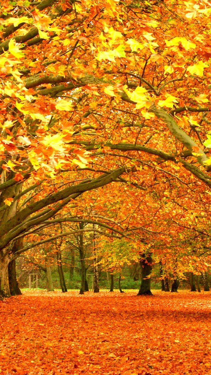 autumn, trees, park, foliage