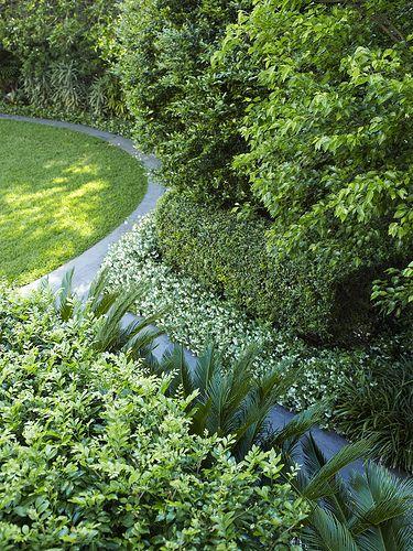 1000 images about garden on pinterest for Cycas landscape design
