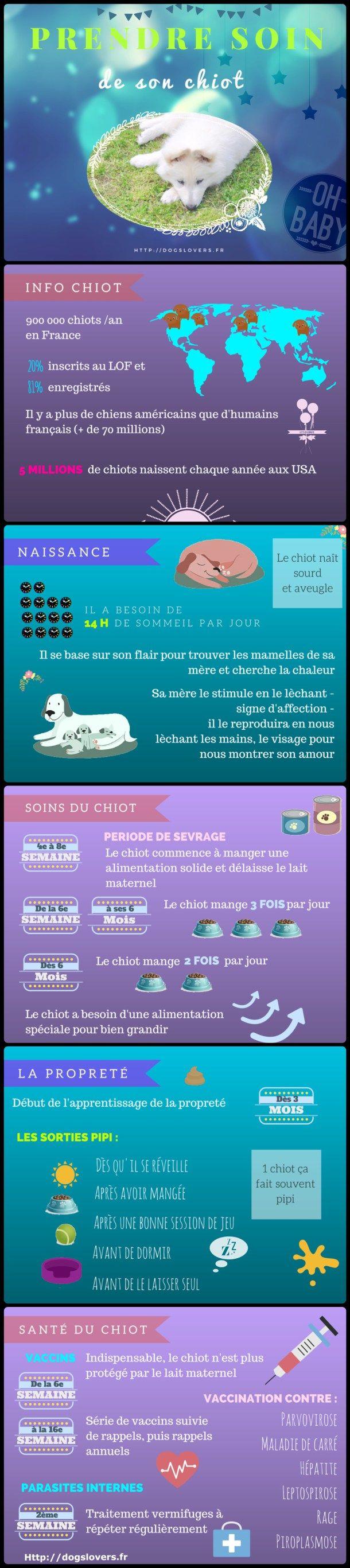 infographie chiot conseil chien