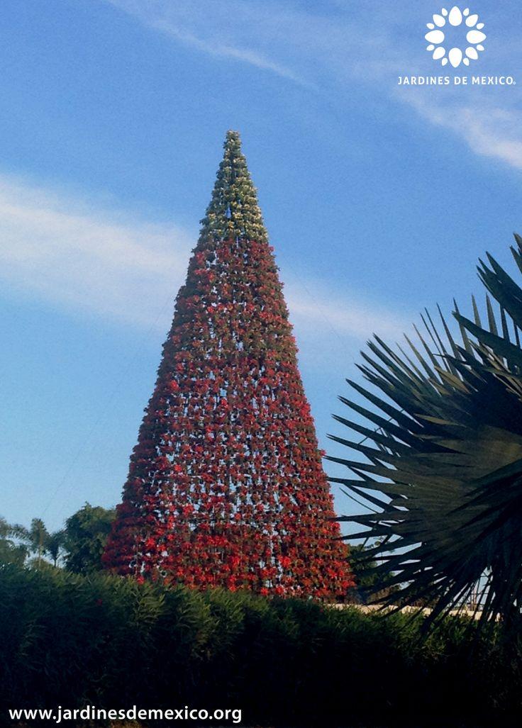 7 best jardines de mexico morelos mexico images on for Paisajismo jardines