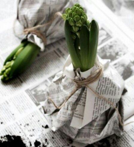 Bloembollen omwikkeld met kranten