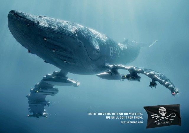 sea4: I Observed That The Campaigns, Creative Noticed, Killers Whales, Seashepherd, Sea Creatures, Ads Campaigns, Sea Shepherd, Attack Aircraft Carrier, Flattop