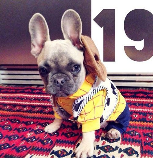 French Bulldog dressed as 'Woody', from Toy Story.
