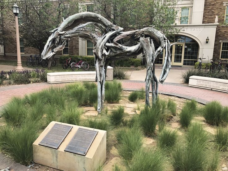 "Cast in bronze but looking exactly like weathered wood, Wind River by sculptor Deborah Butterfield is the perfect homage to West Texas on the Texas Tech campus. Photo courtesy of Texas Tech University | VIE Magazine - November 2017 | The Art & Culture Issue | ""Art in the Wild West: Lubbock's Surprising Art Scene"" 