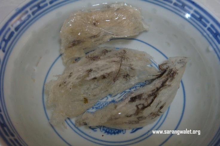 02... sarang #walet kering & mentah tadi direndam  di dalam air bersuhu normal untuk dibersihkan #birdnest