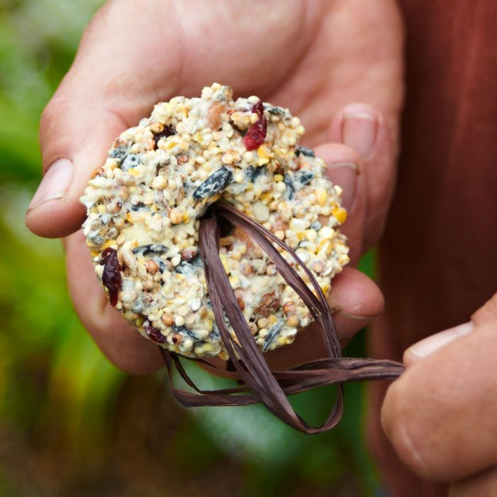 Easy birdseed ornaments - It's for the birds - recipe