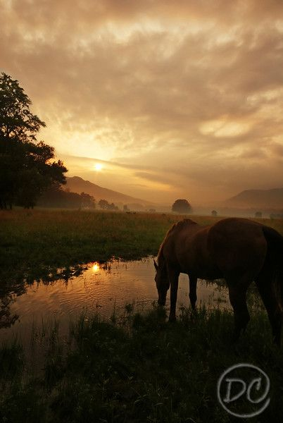 Cades Cove, Great Smoky Mountains National Parks, Tennessee, photo by Deb Campbell