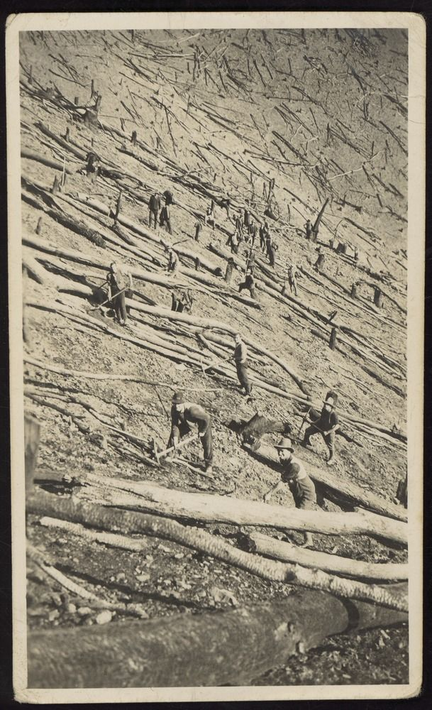 """Sustenance"" workers breaking up tree trunks, Porepunkah, [Vic.] Most sustenance work for relief consisted of very hard physical labour, not easy for those from clerical or other professions."