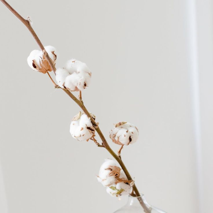 Cotton Flowers #monvestibule #cocooning