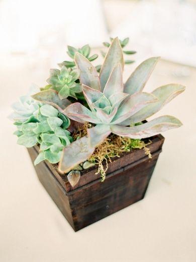 Table ,  details ,  centerpiece ,  film ,  succulent ,  desert ,  cactus ,  Succulents ,  southwest