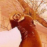 Giant Panda Extinction Gif #1291 - Funny Panda Gifs  Funny Gifs  Panda Gifs