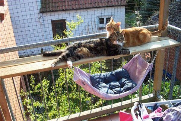 Epingle Par Christine Barbier Sur Balcon Chat Hamac Chat Trucs