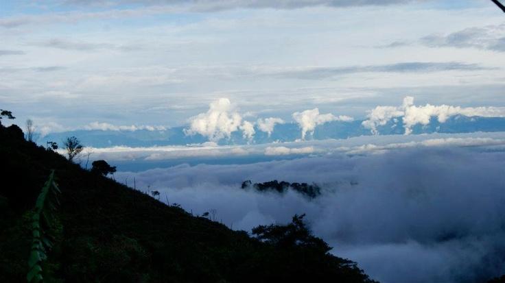 Toro Valle del Cauca