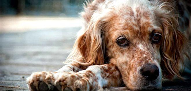 Με στόχο την υιοθεσία αδέσποτων σκύλων από το κυνοκομείο Κατερίνης