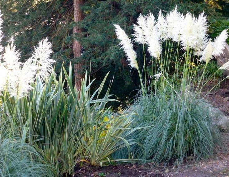 158 best jardin images on Pinterest   Horticulture, Ornamental ...
