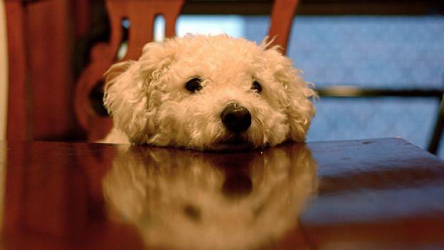 Come stimolare l'olfatto del cane col gioco delle tre tazze