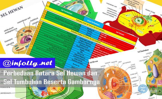 Perbedaan Sel Hewan dan Sel Tumbuhan Beserta Gambarnya  http://www.infollg.net/2017/08/perbedaan-sel-hewan-dan-sel-tumbuhan-beserta-gambarnya/555