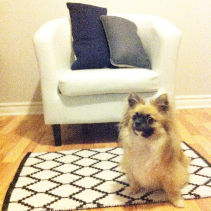 Salon avec Mojito