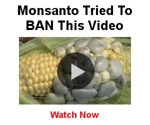 """The USDA has approved two more GMO crops from Monsanto - one for soybeans and another for cotton. They are on a roll after approving Dow's Enlist Duo (known as Agent Orange) a few months ago. This is """"simply the latest example of USDA's allegiance to the biotechnology [pesticide] industry and dependence upon chemical solutions,"""" says Wenonah Hauter, Executive Director of Food & Water Watch. """"This continues the disturbing trend of more herbicide-tolerant crop approvals taking place""""."""