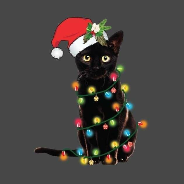 Pin By Stephen Sandberg On Christmas In 2020 Christmas Cats Black Cat Art Christmas Kitten