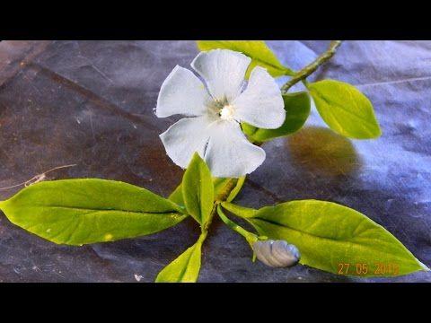 Барвинок « Керамическая флористика. Цветы из холодного фарфора. Уроки и мастер-классы