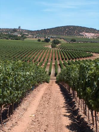 "Alentejo wine country - Portugal. The origin of its name, ""Além-Tejo"", literally translates to ""Beyond the Tagus"""
