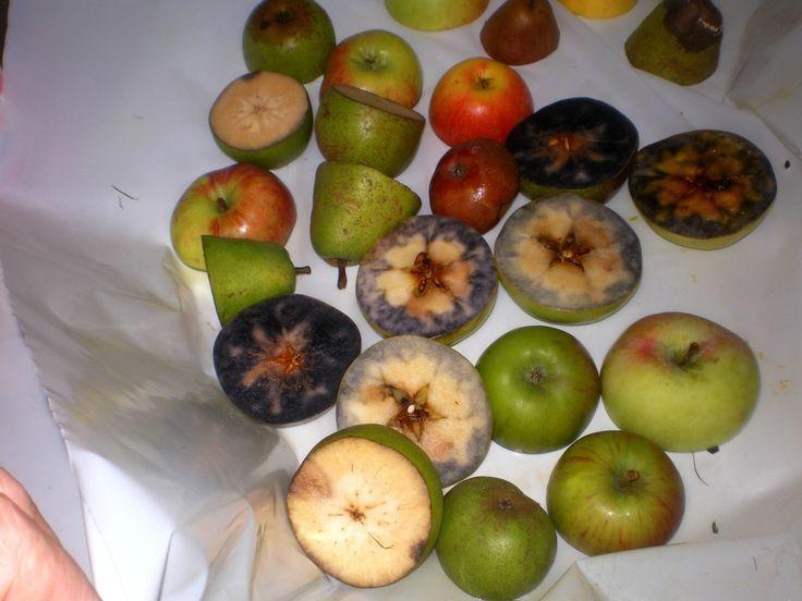 24 best quand cueullir les pommes de votre verger images on pinterest apples conservation. Black Bedroom Furniture Sets. Home Design Ideas