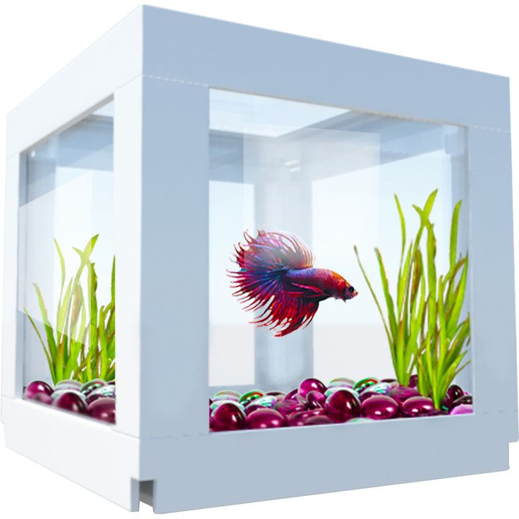 Bio Bubble Pets DecoCubes: House your Beta fish or goldfish in style!