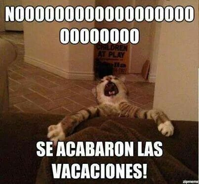 ¡A trabajar! Dude, that, sad, sinking feeling when vacation draws to a close : (