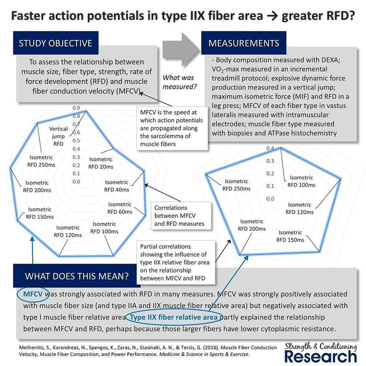 Rate of force development (RFD) is a key determinant of high velocity strength. Since high velocity strength is essential for many sports training adaptations that produce increased RFD are very valuable for athletes.  Muscle fiber type has a substantial effect on maximal muscle fiber contraction velocity (the effect is many times greater than the effect on muscle fiber specific force). This means that type IIX muscle fibers contract much more quickly than type IIA and type I muscle fibers…