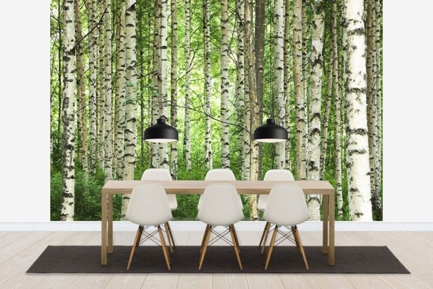 clear birch forest wall mural photo wallpaper. Black Bedroom Furniture Sets. Home Design Ideas