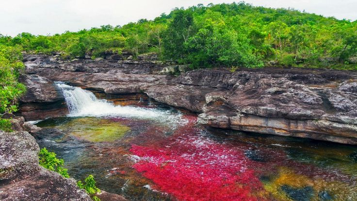 "Columbia's Cano Cristales River of the ""Liquid Rainbow"""