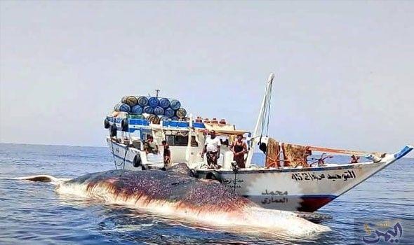 صيادون في المكلا يعثرون على حوت Boat