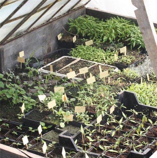 Les 25 meilleures id es de la cat gorie le jardin de l for Jardin hiver plantation